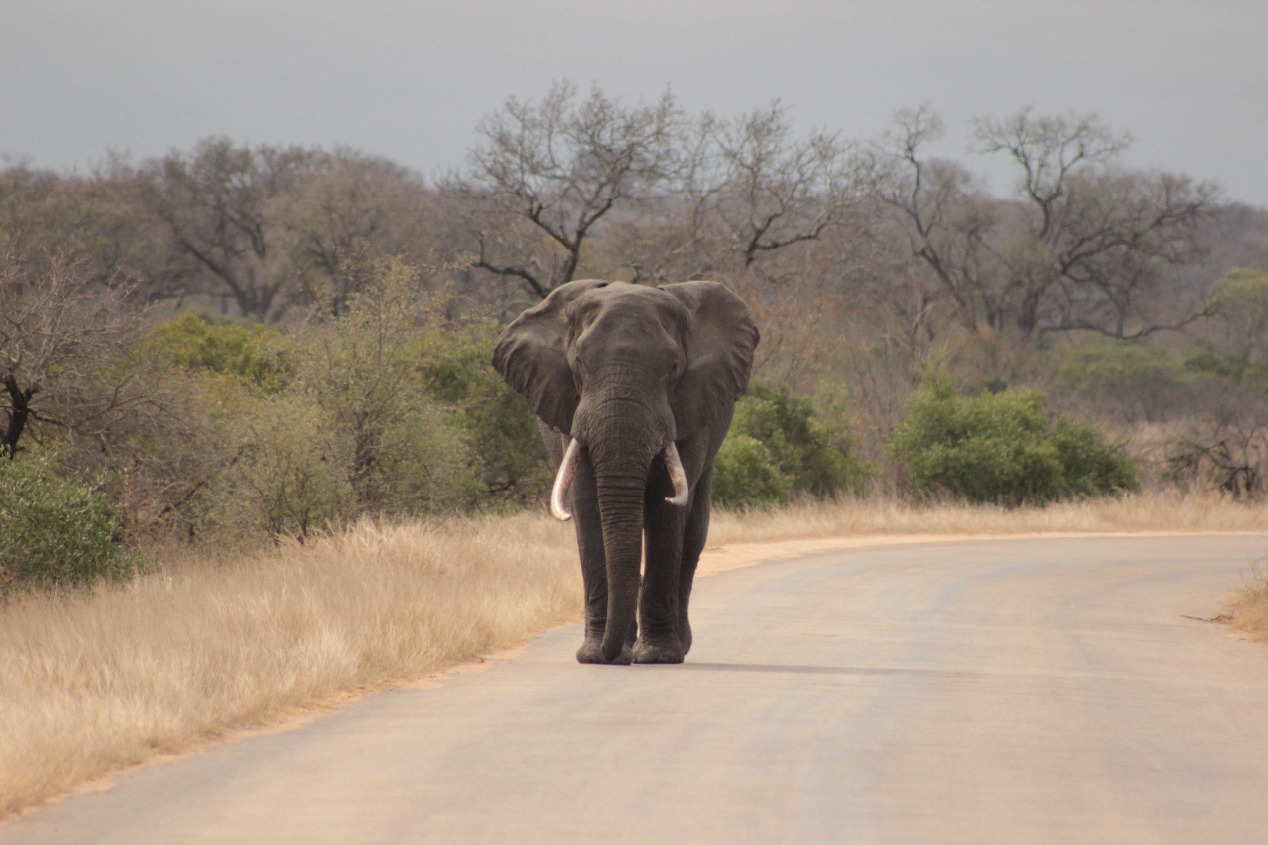 2 Day Safari in Kruger Park Safaria