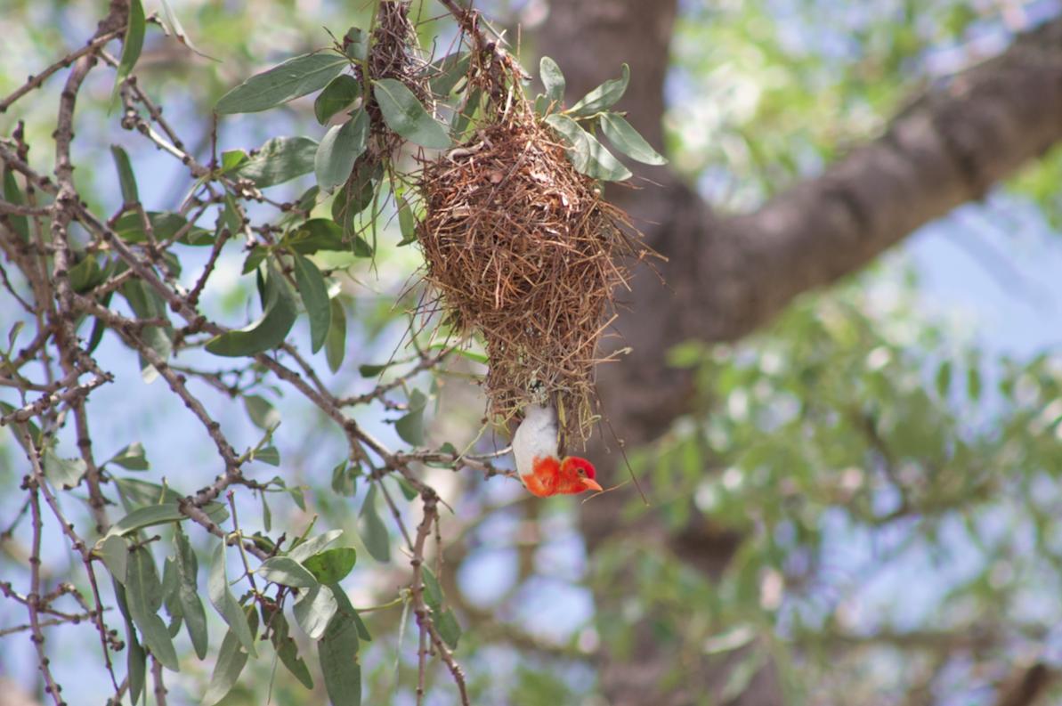 3 Day Kruger National Park Birding Safari