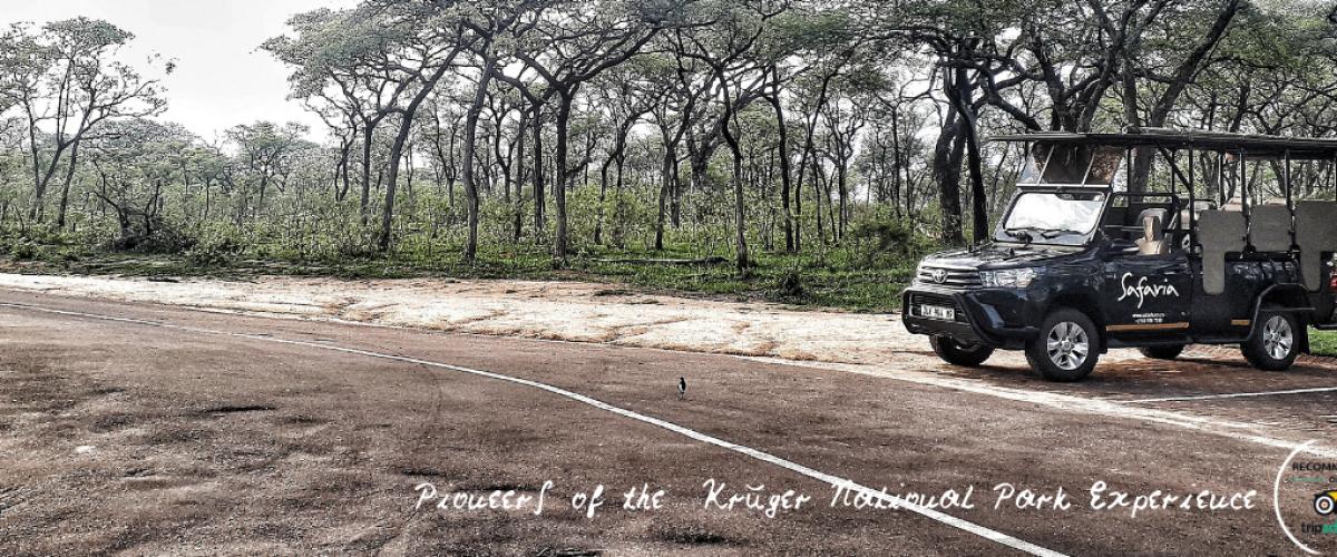 Bespoke, Privately Guided Kruger National Park Safaris