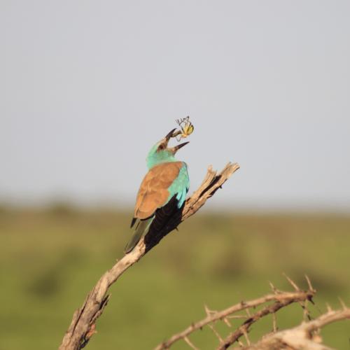 Birding-Safari-4-1