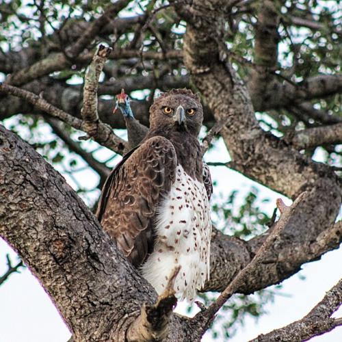 Kruger National Park Birding Safari