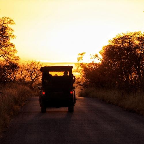Sunrise-Safari-Kruger-park